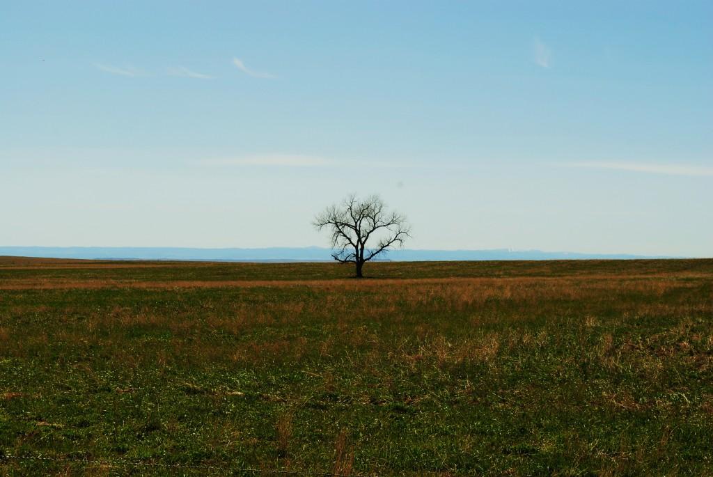 photo of the black hills from Union Center South Dakota