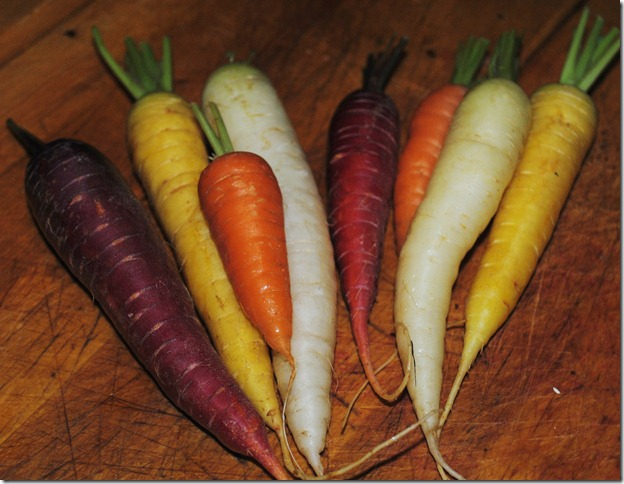 photo colorful carrots